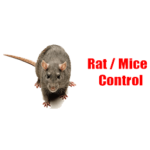 Merlin's Rat And Mice Exterminator