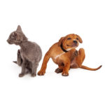 Health Risks of Flea and Tick Infestations